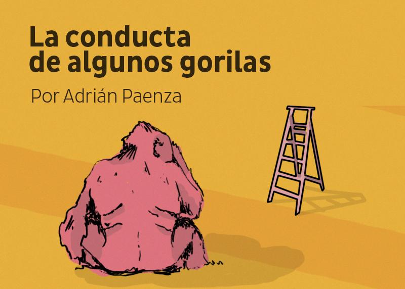 LA CONDUCTA DE ALGUNOS GORILAS